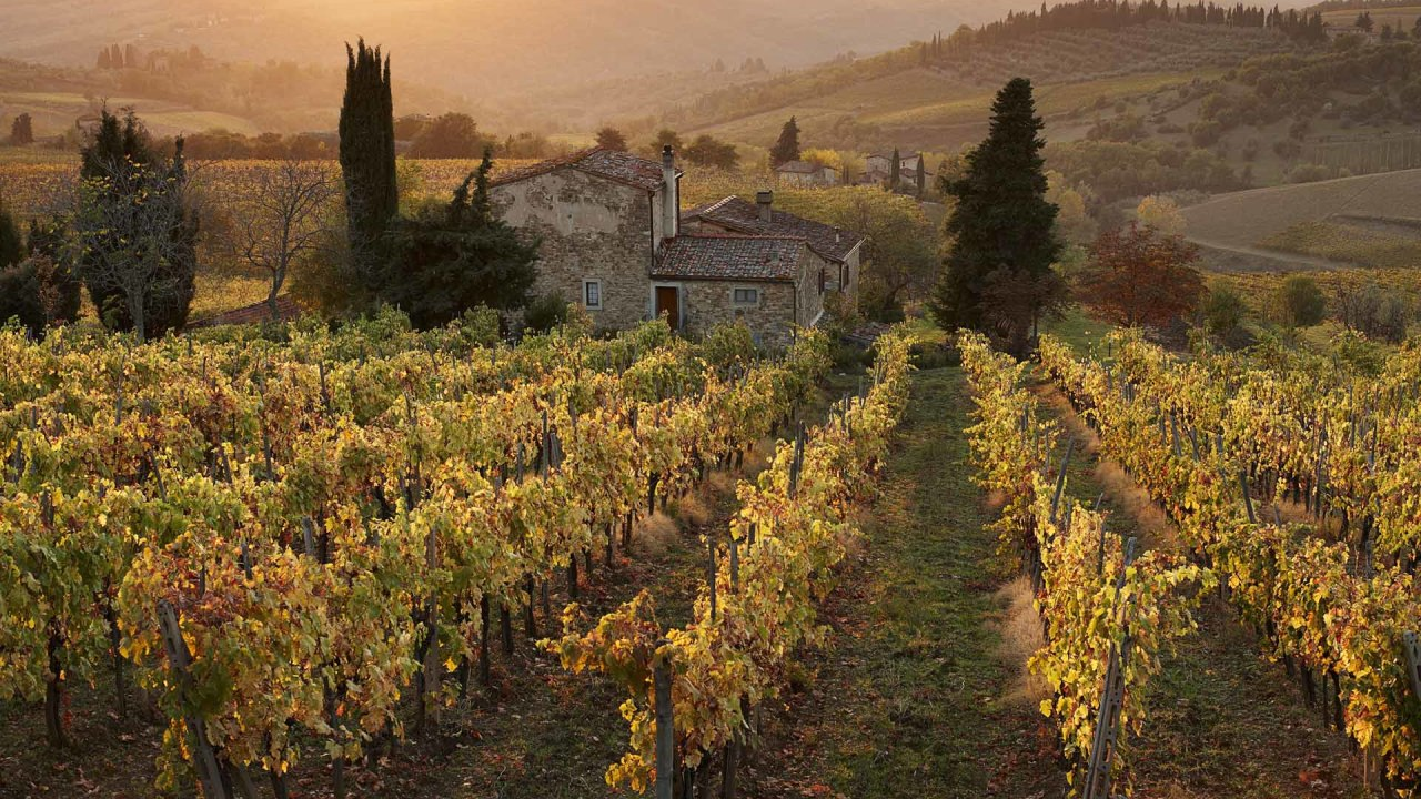 Farmhouse in  vineyard at sunset, Panzano, Chianti, Tuscany, Ita